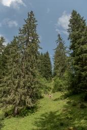 Morzine-été-17_BD©MP-5575